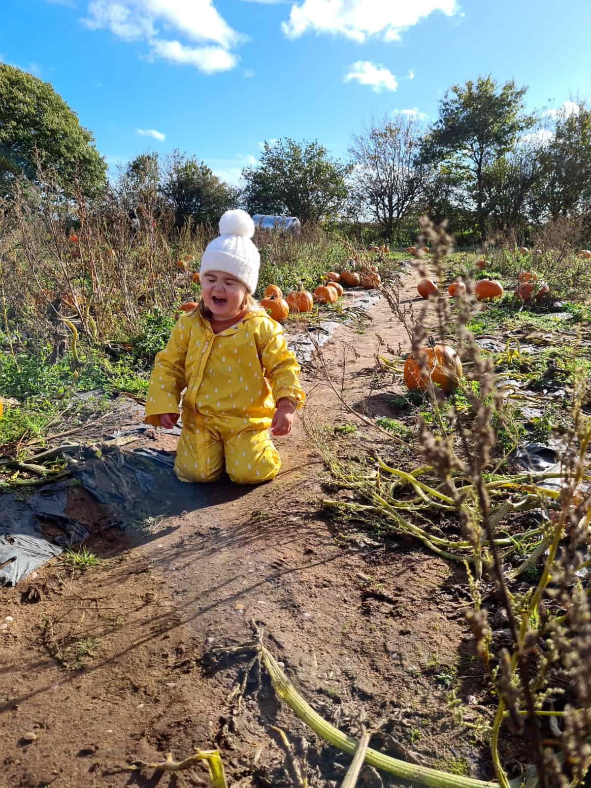 Pumpkin picking meltdown
